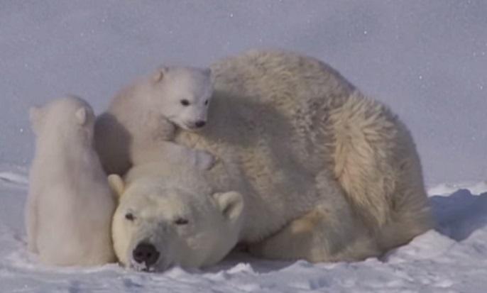 דובי על אמא שלו