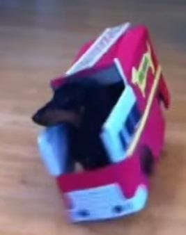 סרטון מצחיק- כלב תחש כבאי