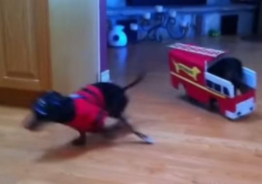 כלבי תחש מכבי אש